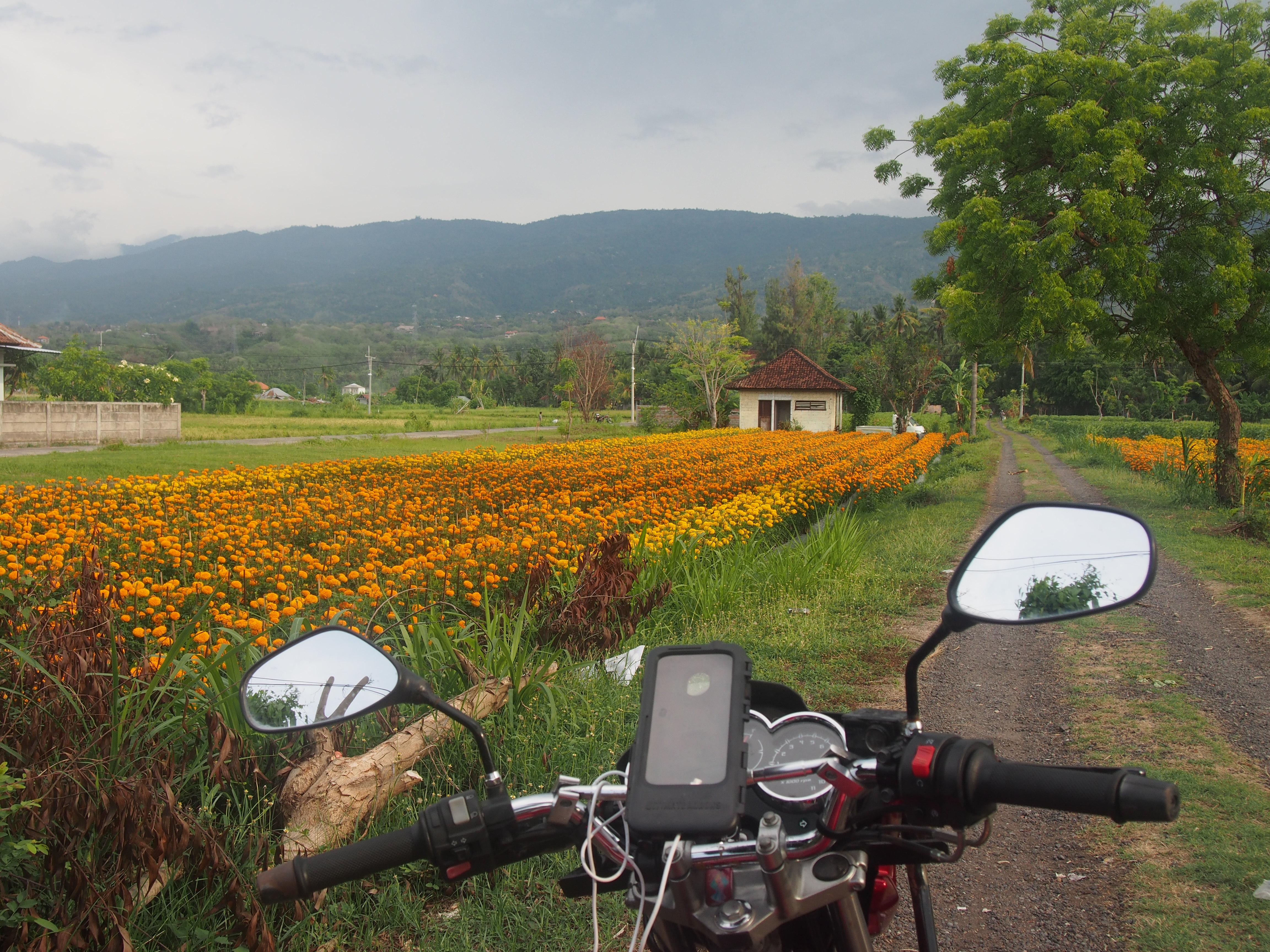 Lovina, northern Bali